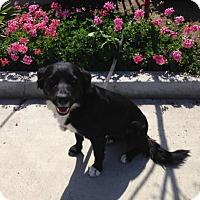 Adopt A Pet :: GIDGET - San Pedro, CA