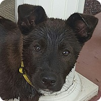 Adopt A Pet :: Reno - Glastonbury, CT