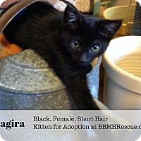 Adopt A Pet :: Bagira - Temecula, CA