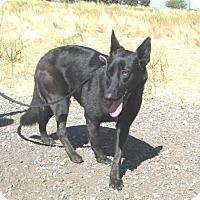 Adopt A Pet :: Loba - Pleasant Grove, CA