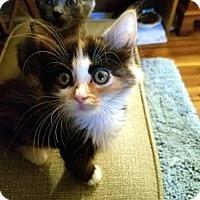 Adopt A Pet :: Pandora - Seaford, DE