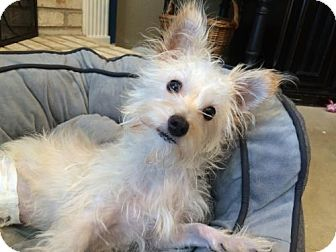 Terrier (Unknown Type, Medium) Mix Dog for adoption in Von Ormy, Texas - Mo