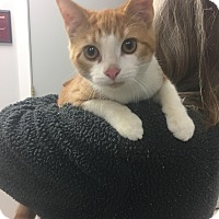 Adopt A Pet :: Braveheart - Fall River, MA