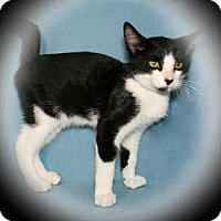 Adopt A Pet :: Hiccup - Bradenton, FL