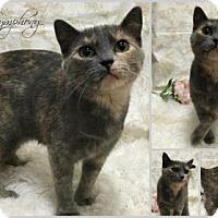 Adopt A Pet :: Symphony - Joliet, IL