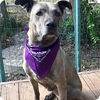 Adopt A Pet :: Faye - Santa Ana, CA