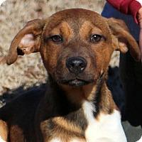 Adopt A Pet :: Indigo - Glastonbury, CT