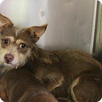 Adopt A Pet :: KH2 Augustus - Odessa, TX
