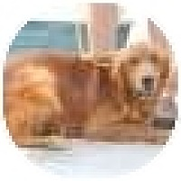 Adopt A Pet :: Banjo - Denver, CO
