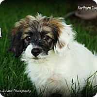 Adopt A Pet :: Brad - Southington, CT