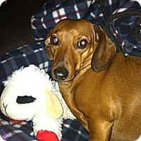 Adopt A Pet :: Genie - Northumberland, ON
