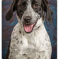 Adopt A Pet :: Elena - Owensboro, KY