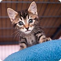 Adopt A Pet :: Miguel - Shelton, WA