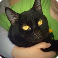 Adopt A Pet :: Zorba - Green Bay, WI