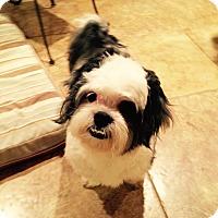Adopt A Pet :: Niko - Nanuet, NY