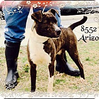 Adopt A Pet :: Arizona - Dillon, SC