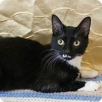 Adopt A Pet :: Vladimir - Muskegon, MI