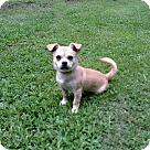 Adopt A Pet :: PUPPY CAMRY