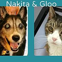 Adopt A Pet :: Nakita - Phoenix, AZ