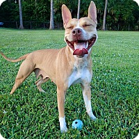 Adopt A Pet :: Candy - Ft. Myers, FL