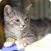 Adopt A Pet :: Cyndie lauper - Roseville, CA