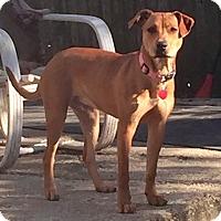 Adopt A Pet :: Ruby - Toms River, NJ