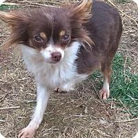 Adopt A Pet :: Bubbles - Southeastern, PA