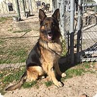 Adopt A Pet :: Apollo - Dripping Springs, TX