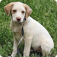 Adopt A Pet :: Zack - Plainfield, CT