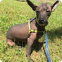 Adopt A Pet :: Gibbs - Spartanburg, SC