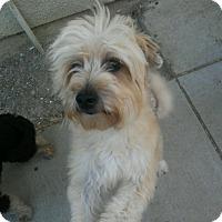 Adopt A Pet :: KEIKO - Gustine, CA