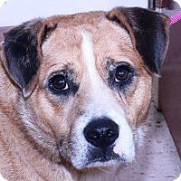 Adopt A Pet :: K-HULA - McDonough, GA