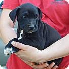 Adopt A Pet :: Keno (7 lb) Video!