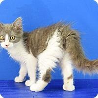 Adopt A Pet :: Stella - Carencro, LA
