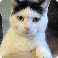 Adopt A Pet :: Mattie - Reeds Spring, MO