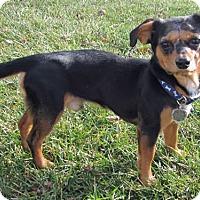 Adopt A Pet :: Felipe - Essex, MD