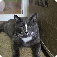 Adopt A Pet :: Cosmic - West Des Moines, IA