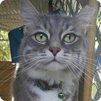 Adopt A Pet :: Shakira - Miami, FL