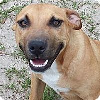 Adopt A Pet :: Durango - Williston, FL