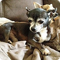 Adopt A Pet :: Rami - Hubertus, WI