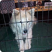 Adopt A Pet :: Bella - Puyallup, WA