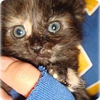 Adopt A Pet :: Arielle - Palmdale, CA