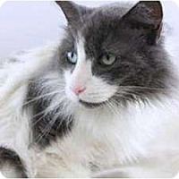 Adopt A Pet :: Mango - Easley, SC