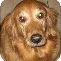 Adopt A Pet :: Brittany - Scottsdale, AZ