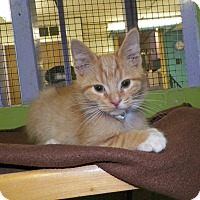 Adopt A Pet :: Moose - Dover, OH