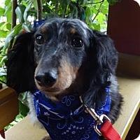 Adopt A Pet :: OSCAR aka OZZIE - Portland, OR