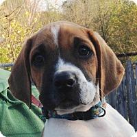 Adopt A Pet :: Franklin - Pleasant Plain, OH