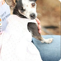 Adopt A Pet :: Patches - Creston, CA