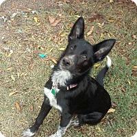 Adopt A Pet :: Rover - Edmond, OK