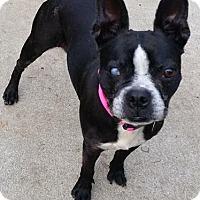 Adopt A Pet :: Hillary - Irmo, SC